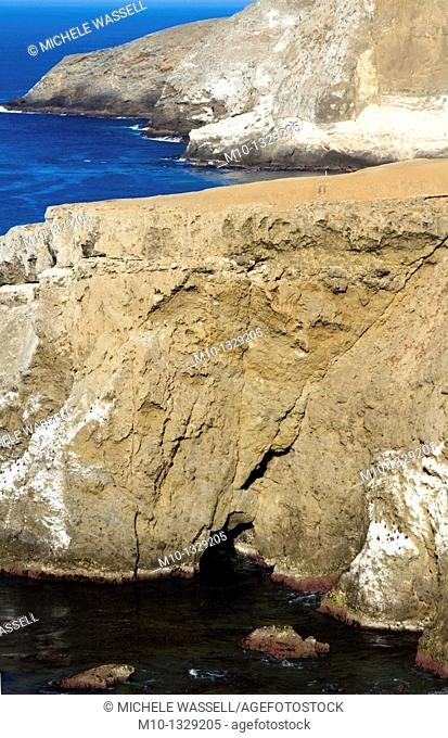 Elephant Seal cove area, California