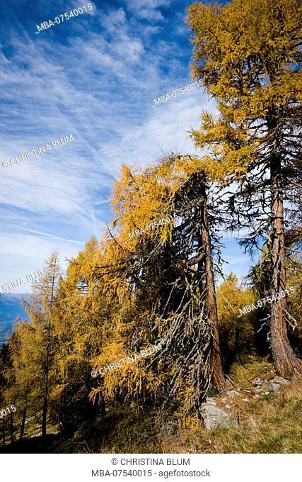 Autumn forest, Obermillstatt, Lake Millstatt, Carinthia, Austria