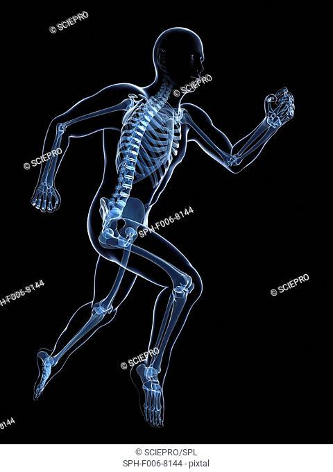 Running skeleton, computer artwork
