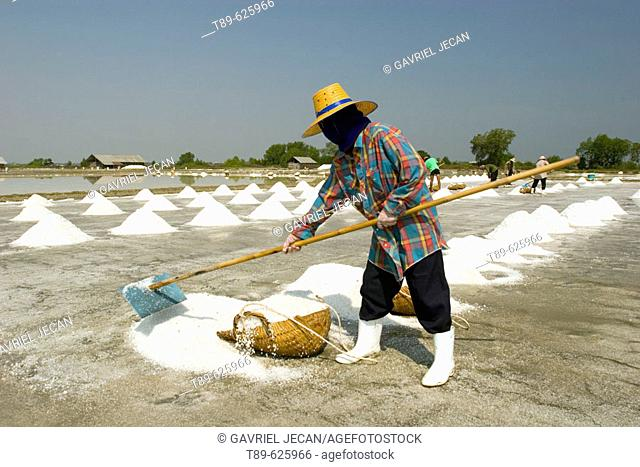 Workers colecting sea salt from the dry ponds in the Samut Songkhram area