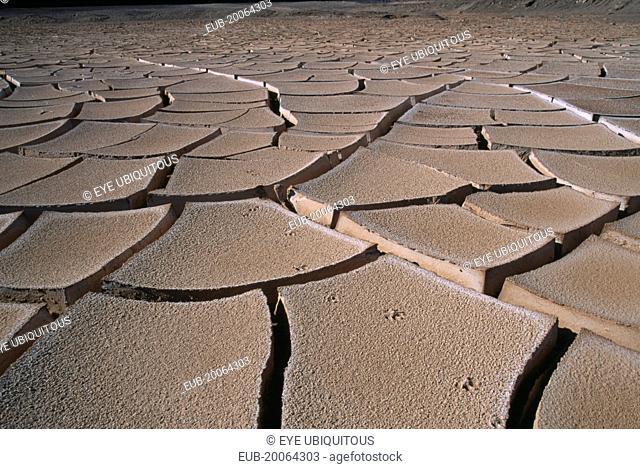 Cracked mud and fox tracks on desert surface near San Pedro de Atacama