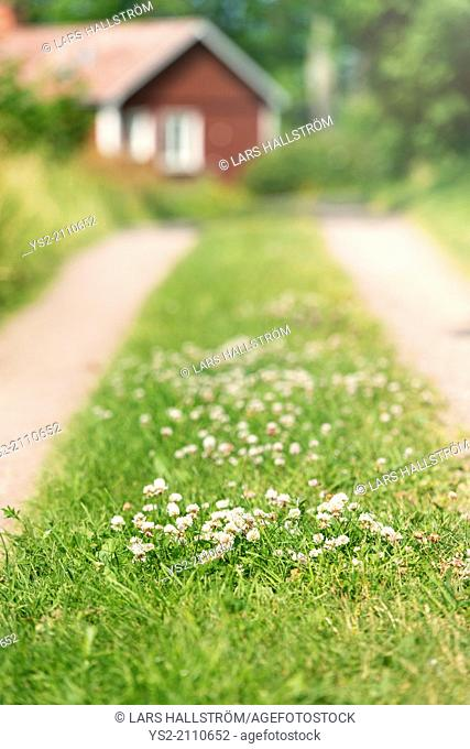 Green grass on road leading to red wooden cottage in rural setting, Sweden