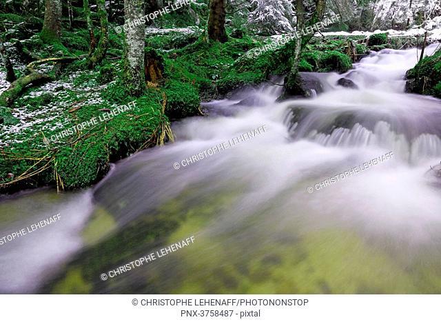 Vosges. Region Gerardmer. Vosges forest during winter. Torrent