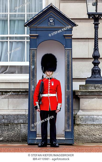 Guard of the Royal Guard with bearskin in front of Buckingham Palace, London, England, United Kingdom