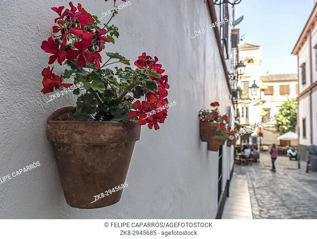 Flowerpots with red flowers in a typical street of Seville, Andalusia, Spain, conceptual image