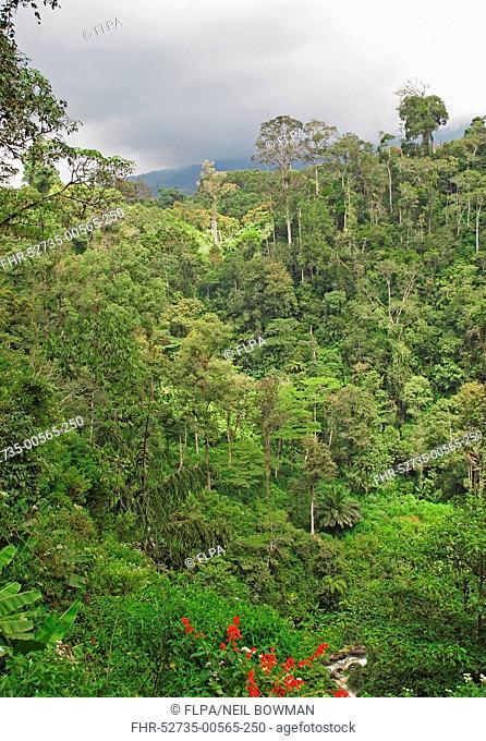 View of montane rainforest habitat, Kerinci Seblat N.P., Sumatra, Greater Sunda Islands, Indonesia, June