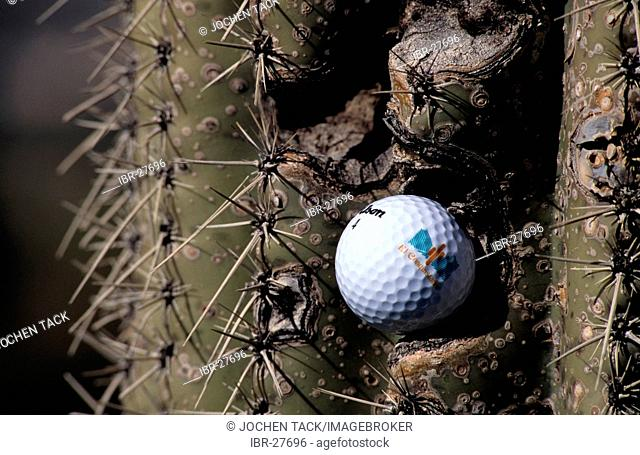 USA, United States of America, Arizona: golf cours in Tucson. Sheraton El Conquistador Golfclub. golfball sticks in a cactus