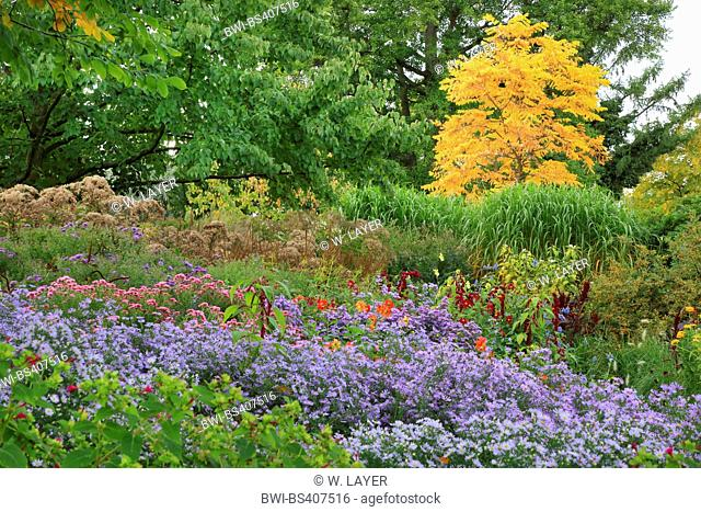 gardenb with autumn asters, Germany