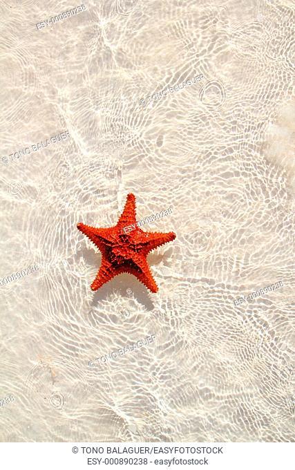 beautiful starfish orange in wavy shallow water