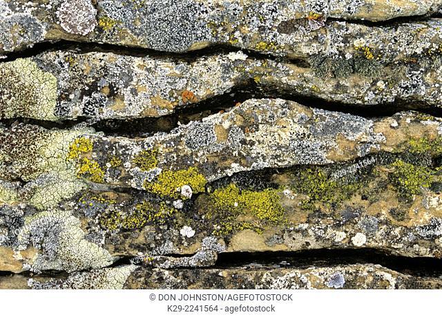Crustose lichen, Dinosaur Provincial Park, AB, Canada