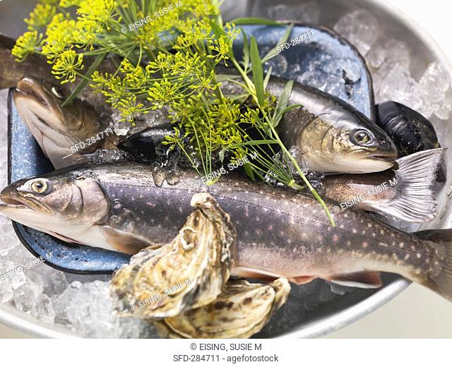Still life with charr, oysters and dill