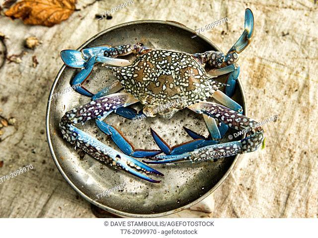 blue swimmer crabs in the crab market on Koh Sukorn island in Thailand