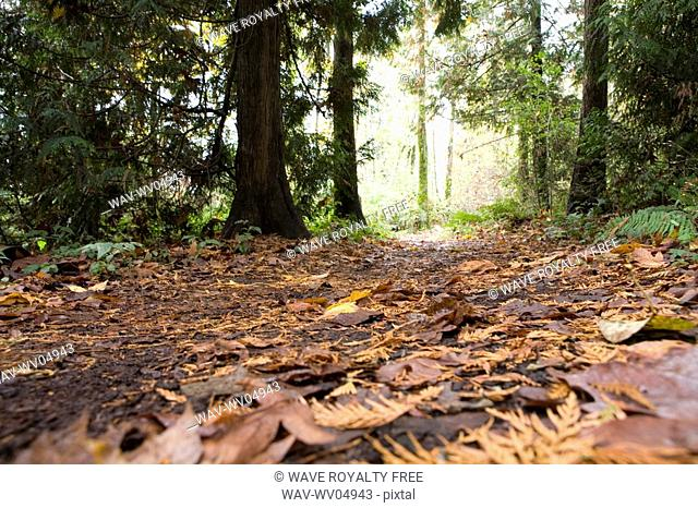 Trail in fall, Stanley Park, Vancouver, BC