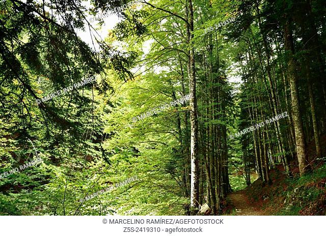 Forest Irati, Navarra