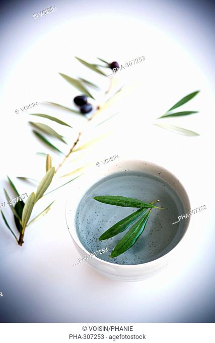Olive leaves herbal tea