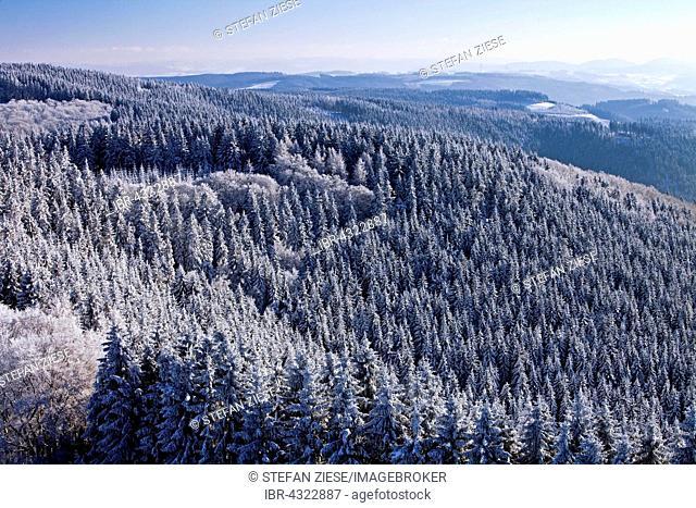 View of snowy trees in Sundern, Sauerland, North Rhine-Westphalia, Germany