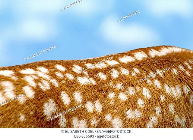Deer's loin