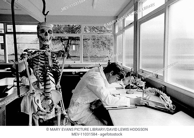 Schoolboy working with an animal skeleton in the science laboratory with a human skeleton on the left at Atlantic College (United World College of the Atlantic)