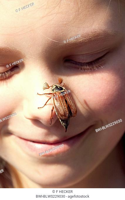 common cockchafer, maybug Melolontha melolontha, sitting on a girl's nose, Germany