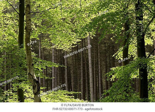 Marsham woods