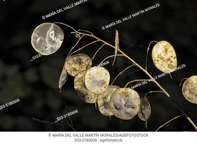 Leaves in autumn time, Avila, Spain