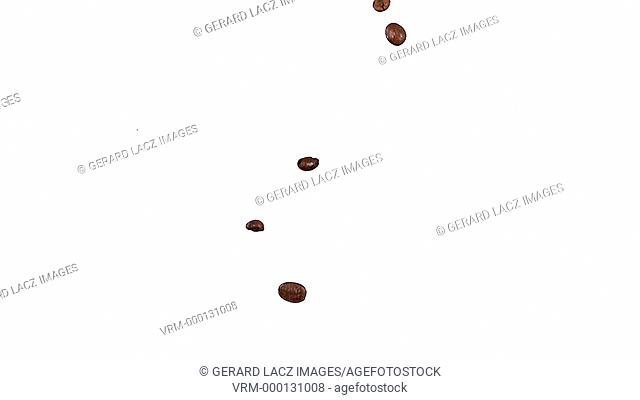 Coffee Beans Falling against White Background, Slow Motion