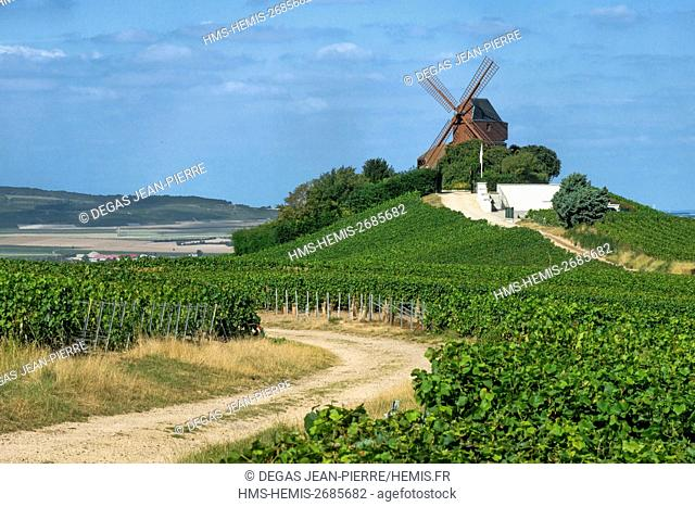 France, Marne, Verzenay, mountain of Reims, Mount Boeuf, Verzenay mill of the 19th century in a vineyard of Champagne classified Grand Cru
