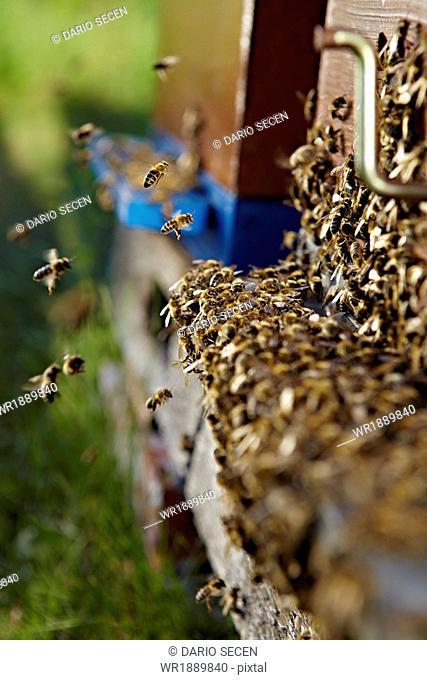 Beehive In Summer, Croatia, Europe