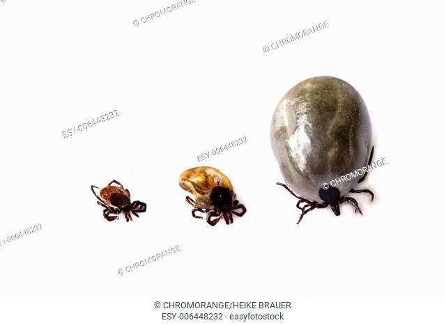 Thre different ticks on white background
