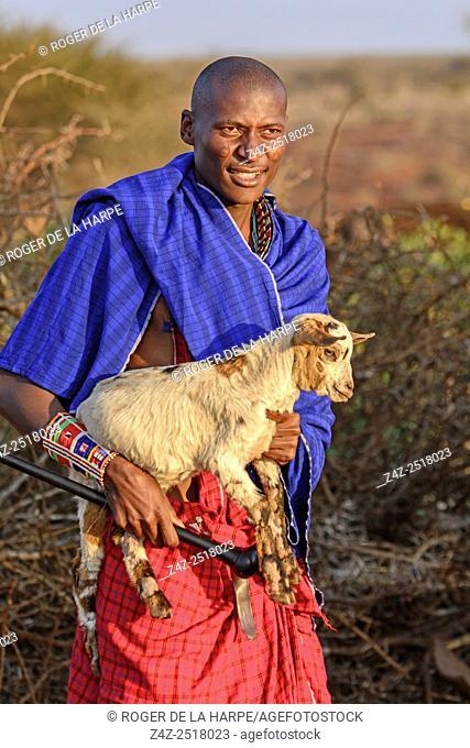 Maasai (Masai) man carrying a goat. Satao Elerai Conservancy. Near Amboseli National Park. Kenya