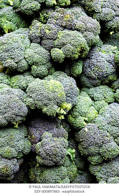 Green with purple Broccoli calabrese vegetable