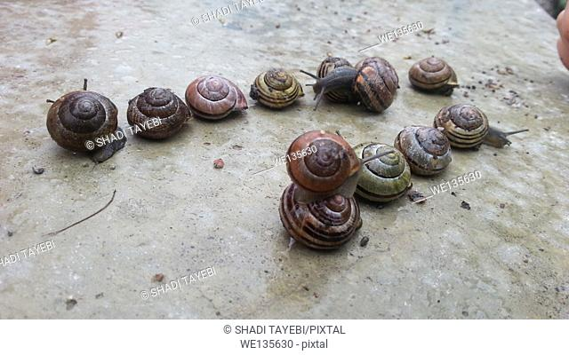 A group of snails crawling on the ground