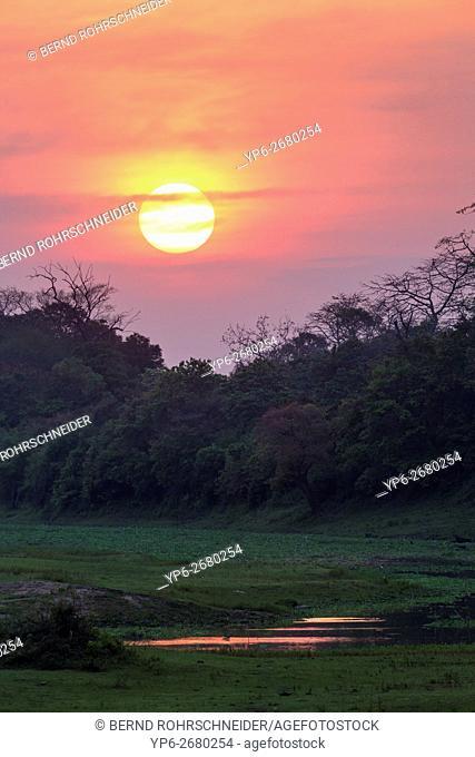 landscape at sunset in Kaziranga National Park, Assam, India