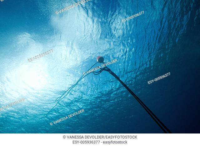 Underwater scene with buoy on surface