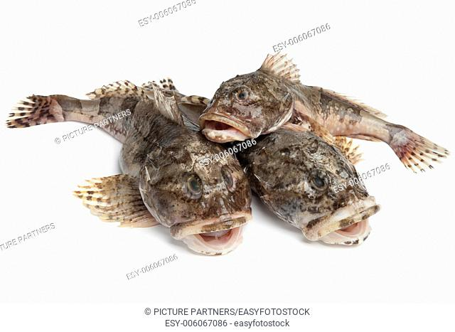 Fresh raw Cottidae on white background