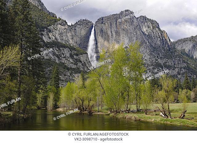 Yosemite Falls as viewed from the swinging Bridge area, Merced River