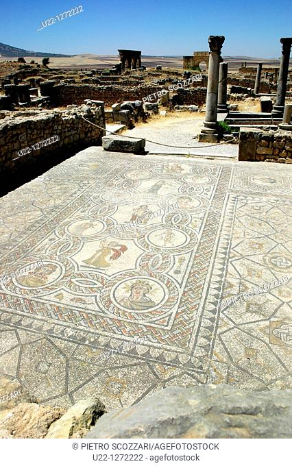 Volubilis (Morocco): mosaic in the archaeological site