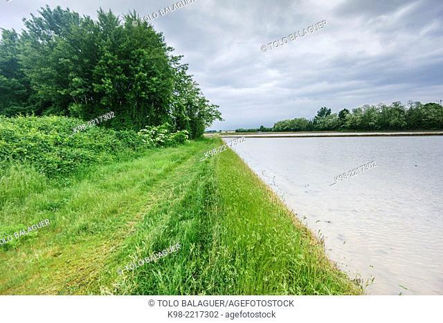 campos inundados por arrozales, cerca de Novara, Piamonte, Italy