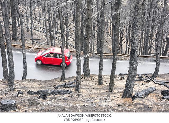 A car drives on a mountain road a few days after huge forest fire in the mountain pine forests on Gran Canaria, Canary Islands, Spain