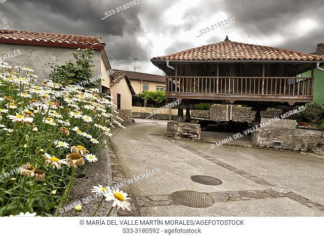 Horreo and daisies in Espinaredo. Asturias. Spain