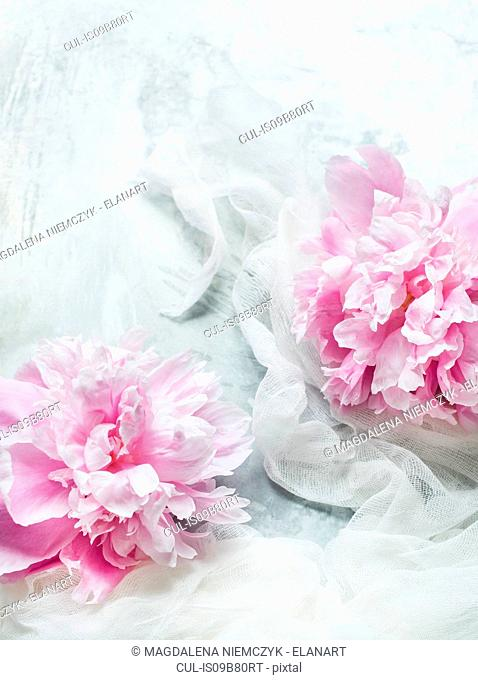 Pink peonies on white fabric