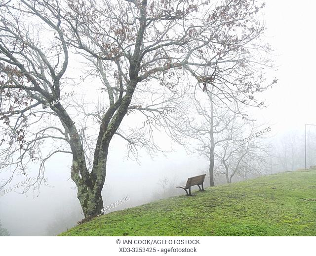 park bench and bare trees in fog, Tourtres, Lot-et-Garonne Department, Nouvelle Aquitaine, France