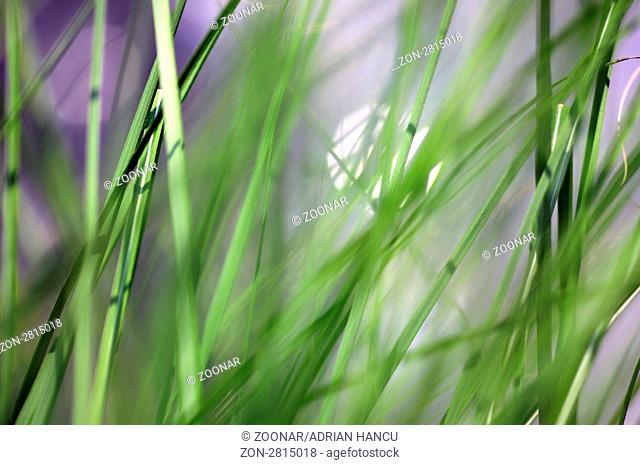 This photograph represent a beautiful fresh green grass - shallow DoF