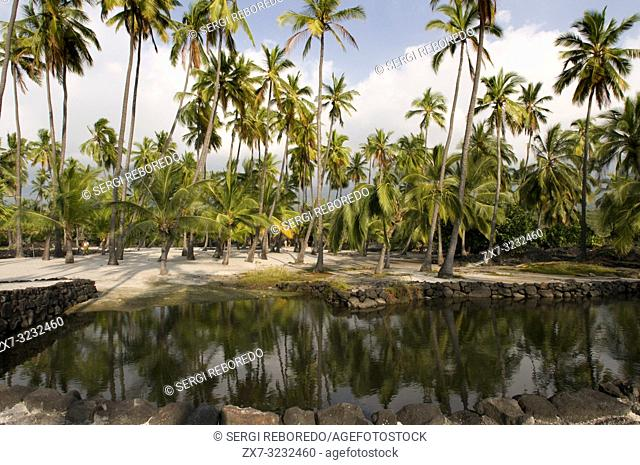 Palms of Pu'uhonua o Honaunau National Historic in Park. Big Island. Hawaii. Green Sea Turtle. Green sea turtle on beach at the Puuhonua o Honaunau National...