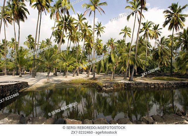 Palms of Pu'uhonua o Honaunau National Historic in Park. Big Island. Hawaii. Green Sea Turtle. Green sea turtle on beach at the Puuhonua o Honaunau National...
