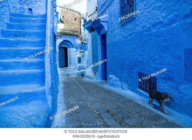 Morocco, Chefchaouen, Medina, cat