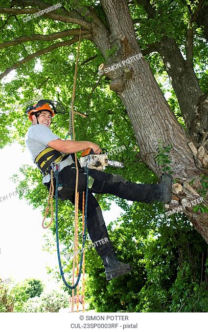 Tree surgeon working on tree