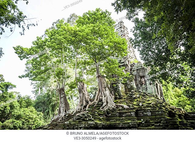Three big trees growing over a temple in Angkor Thom complex (Siem Reap Province, Cambodia)