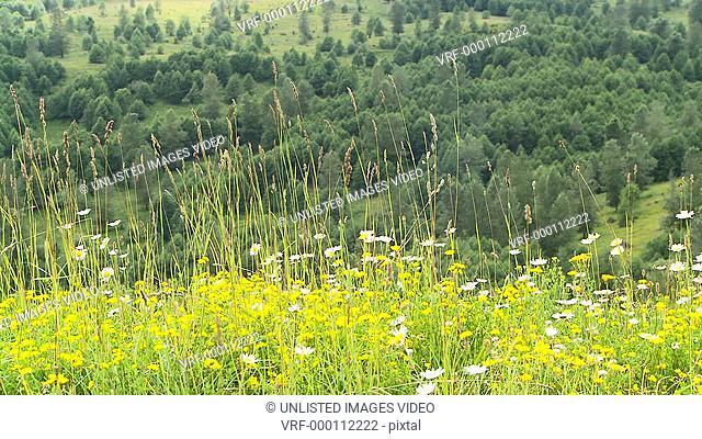 Wild Flower Scenic