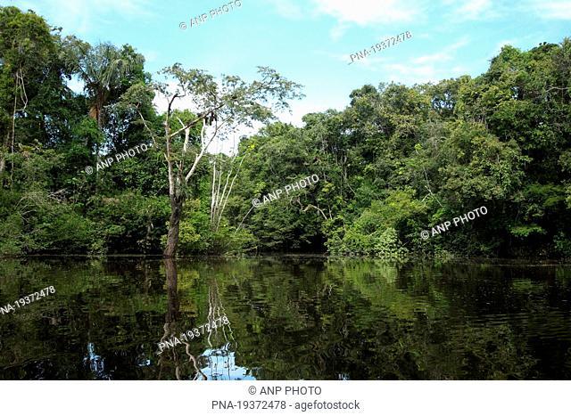 Tamshiyacu Tahuayo Reserve, Mosino Lake, Loreto, Maynas, Peru, South America